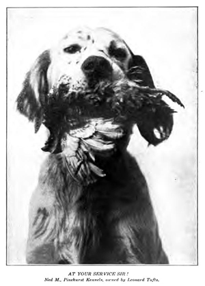 "Photograph of ""Ned M., Pinehurst Kennels, owned by Leonard Tufts,"" from Tufts's <i>Pinehurst North Carolina,</i> p. 46, published 1906, Boston, Massachusetts. Presented on Archive.org."