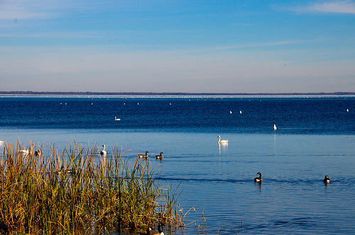 Lake Mattamuskeet. Image courtesy of Shannon Craven.