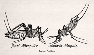 illustration, resting mosquitos