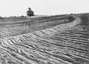 Mangum terraces near Raleigh, ca. 1912. North Carolina Collection, University of North Carolina at Chapel Hill Library.