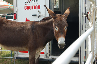Benson Mule Day. Image courtesy of Flickr user Mangrove Mike.