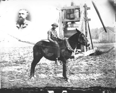 """African-American young man riding mule turning cotton press, ca. 1890, unidentified location. From the General Negative Collection, North Carolina State Archives, call #: N_2003_9_41."""