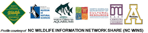 Profile courtesy of NC WINS (NC Wildlife Information Network Share)