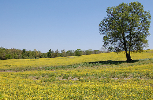 Field in Chatham County, NC, part of the Piedmont