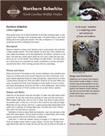 Download the full profile at the Wildlife Resources Commission web site