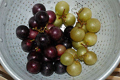 Scuppernong Grapes, right, NC State Fruit. Image courtesy of Flickr user dalexfilms.