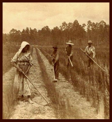"""Georgia rice field workers."""