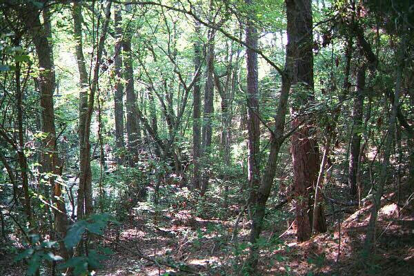 "<img typeof=""foaf:Image"" src=""http://statelibrarync.org/learnnc/sites/default/files/images/nags_head_woods.jpg"" width=""600"" height=""400"" alt=""Plant and animal species in Nags Head Woods"" title=""Plant and animal species in Nags Head Woods"" />"