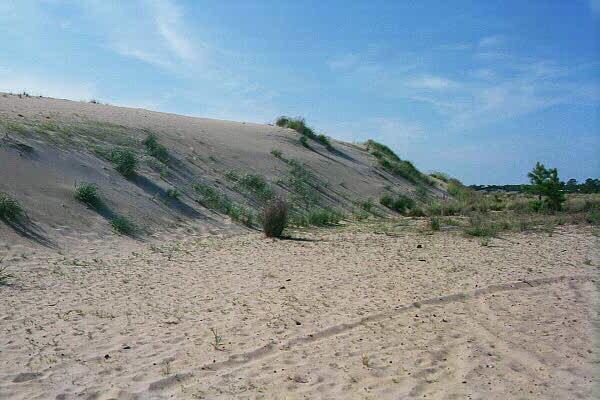 "<img typeof=""foaf:Image"" src=""http://statelibrarync.org/learnnc/sites/default/files/images/sand_grasses.jpg"" width=""600"" height=""400"" alt=""How vegetation affects growth and migration-Run Hill Dune"" title=""How vegetation affects growth and migration-Run Hill Dune"" />"