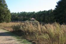 Prairie outside Town Creek Indian Mound