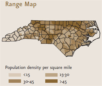 White-tailed Deer (from NC WINS) | NCpedia on